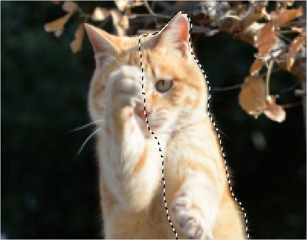 Photoshop(フォトショップ)で画像(写真)のブレ(ボカシ)を修正して見た目を引き立てる方法⑤